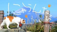TV 番組/DVD にゃらんたび フフフッ篇(2012 年)