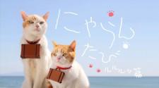 TV 番組/DVD にゃらんたび ルルルッ篇(2013 年)